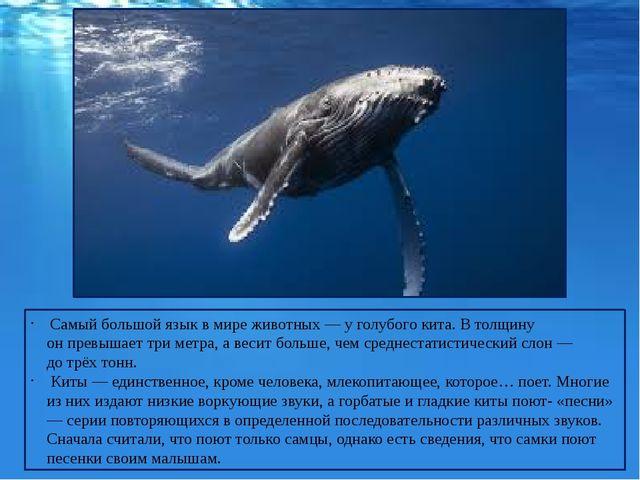 Ученые расшифровали язык китов - Технологии - info.sibnet.ru | 480x640