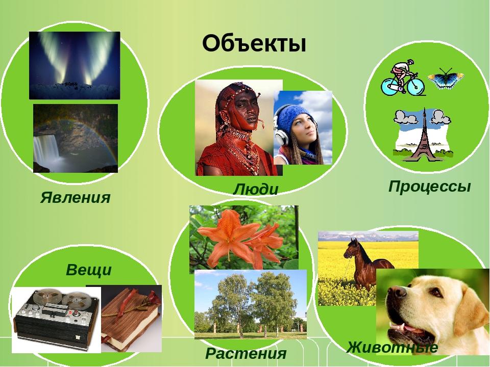 Объекты Явления Процессы Растения Животные Люди