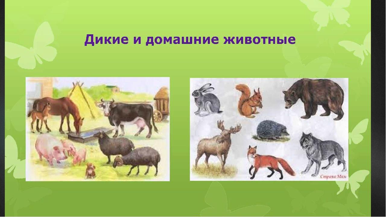 серый дикие и домашние животные картинки к занятию мне трудно найти