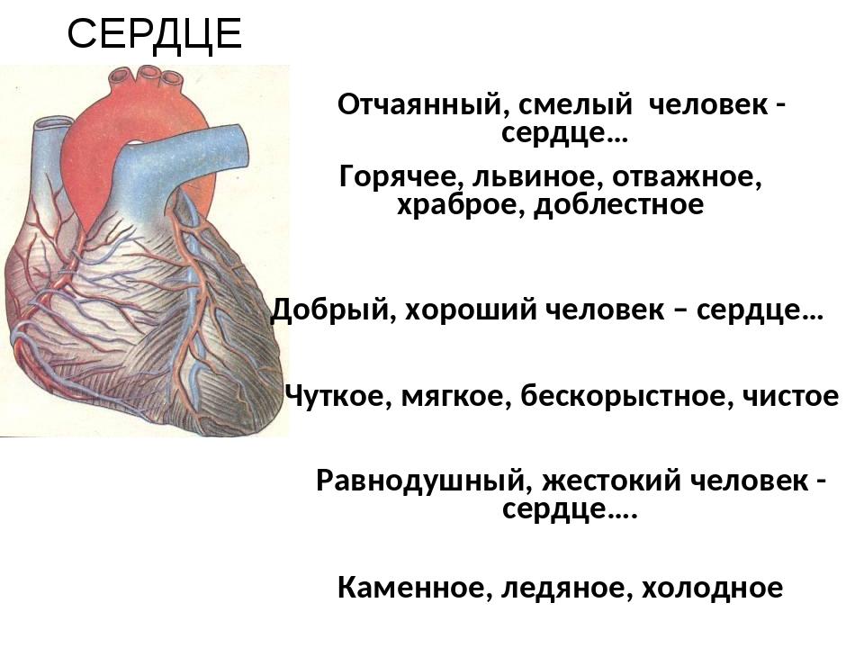 Отчаянный, смелый человек - сердце… СЕРДЦЕ Равнодушный, жестокий человек - се...