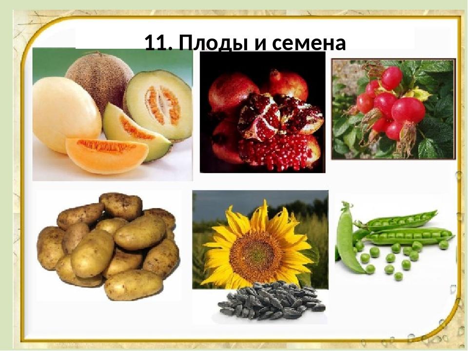 Картинки плодов человека