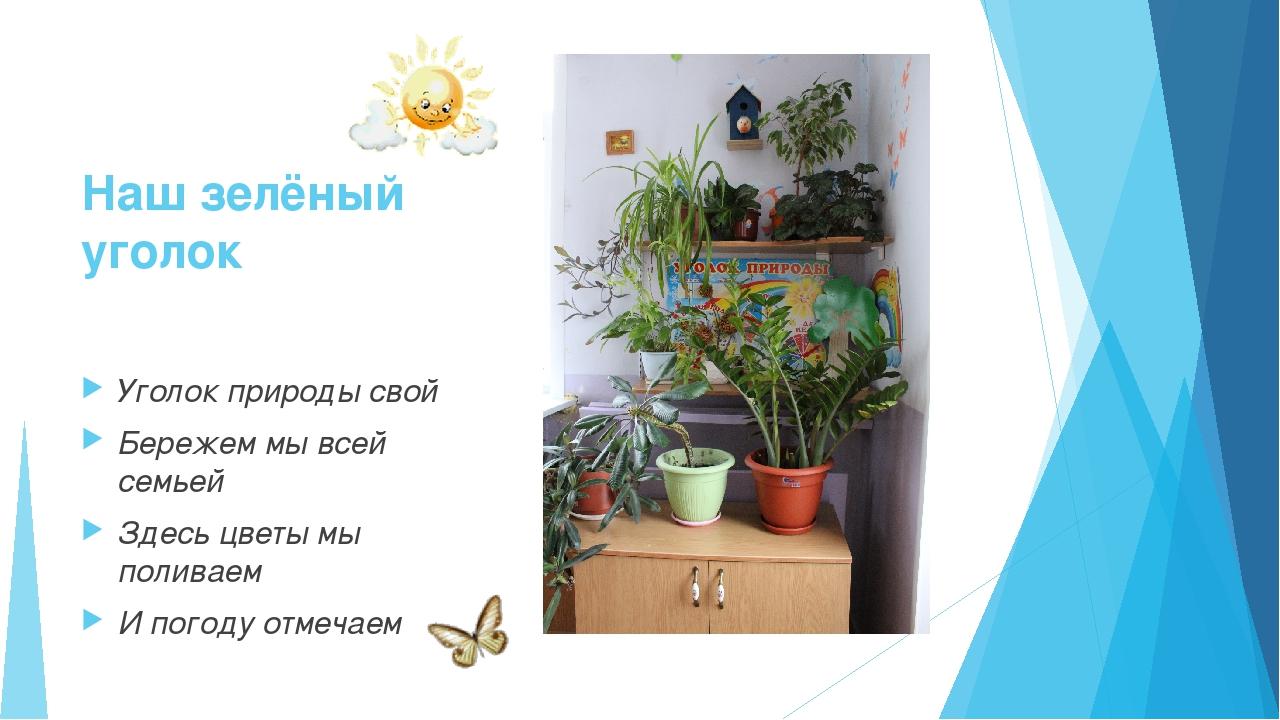 Наш зелёный уголок Уголок природы свой Бережем мы всей семьей Здесь цветы мы...
