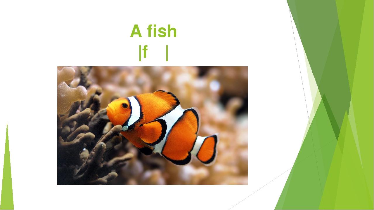 A fish |fɪʃ|