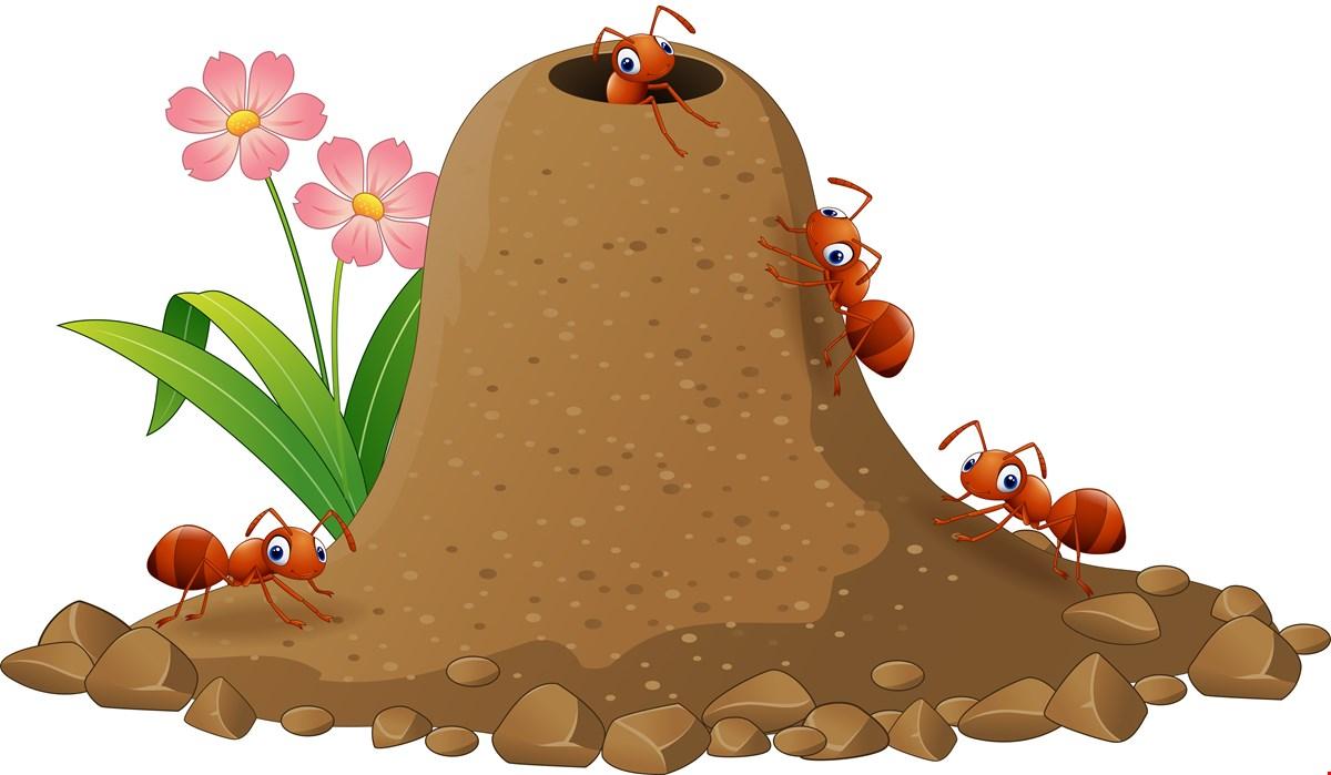 честь реки, картинка анимация муравейник сделать салат