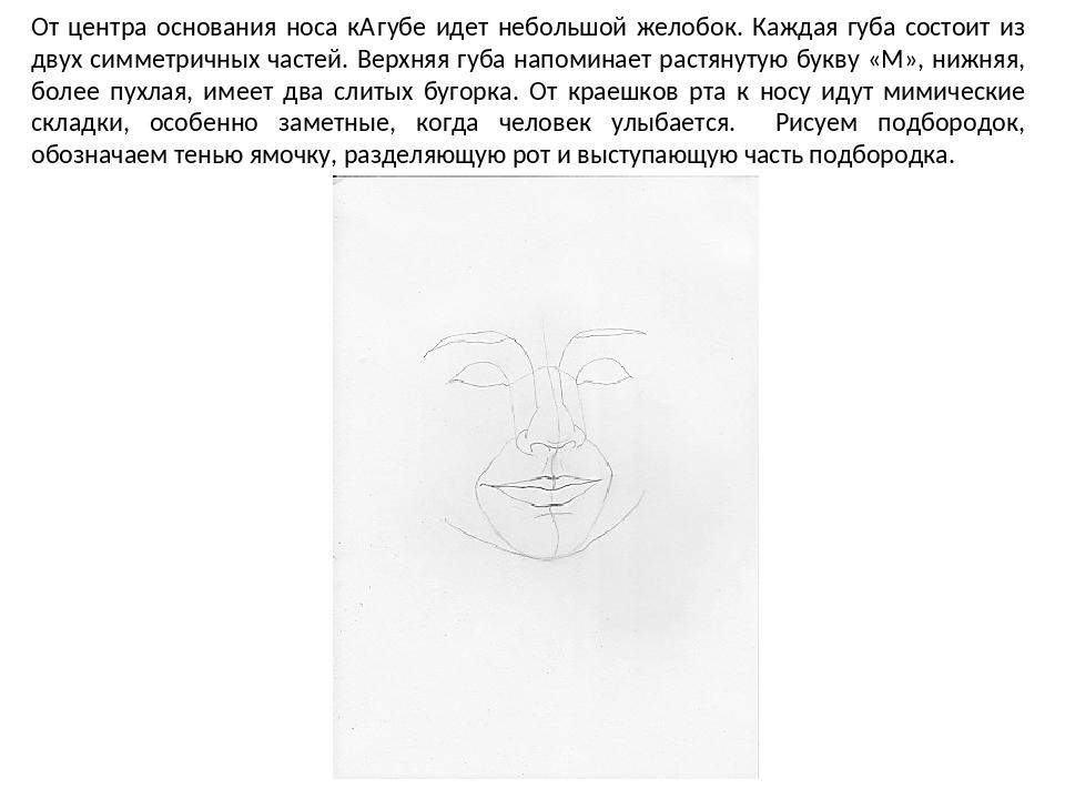 От центра основания носа к губе идет небольшой желобок. Каждая губа состоит...