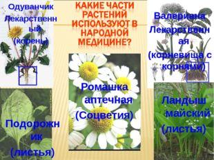 Ромашка аптечная (Соцветия) Валериана Лекарственная (корневища с корнями) Оду
