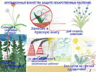 Ходи по тропинкам! Без цели не срезай одуванчики! Не собирай растения в эколо