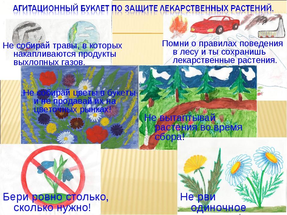 Не вытаптывай растения во время сбора! Не рви одиночное растение! Не собирай...