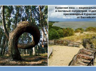 Куршская коса— национальный парк ипесчаный полуостров, отделяющий пресново
