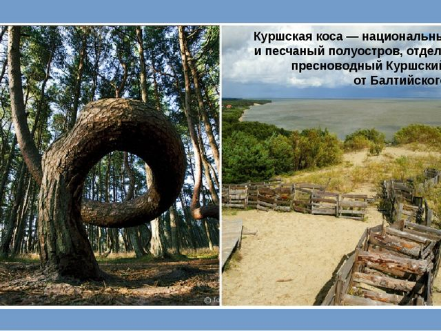 Куршская коса— национальный парк ипесчаный полуостров, отделяющий пресново...