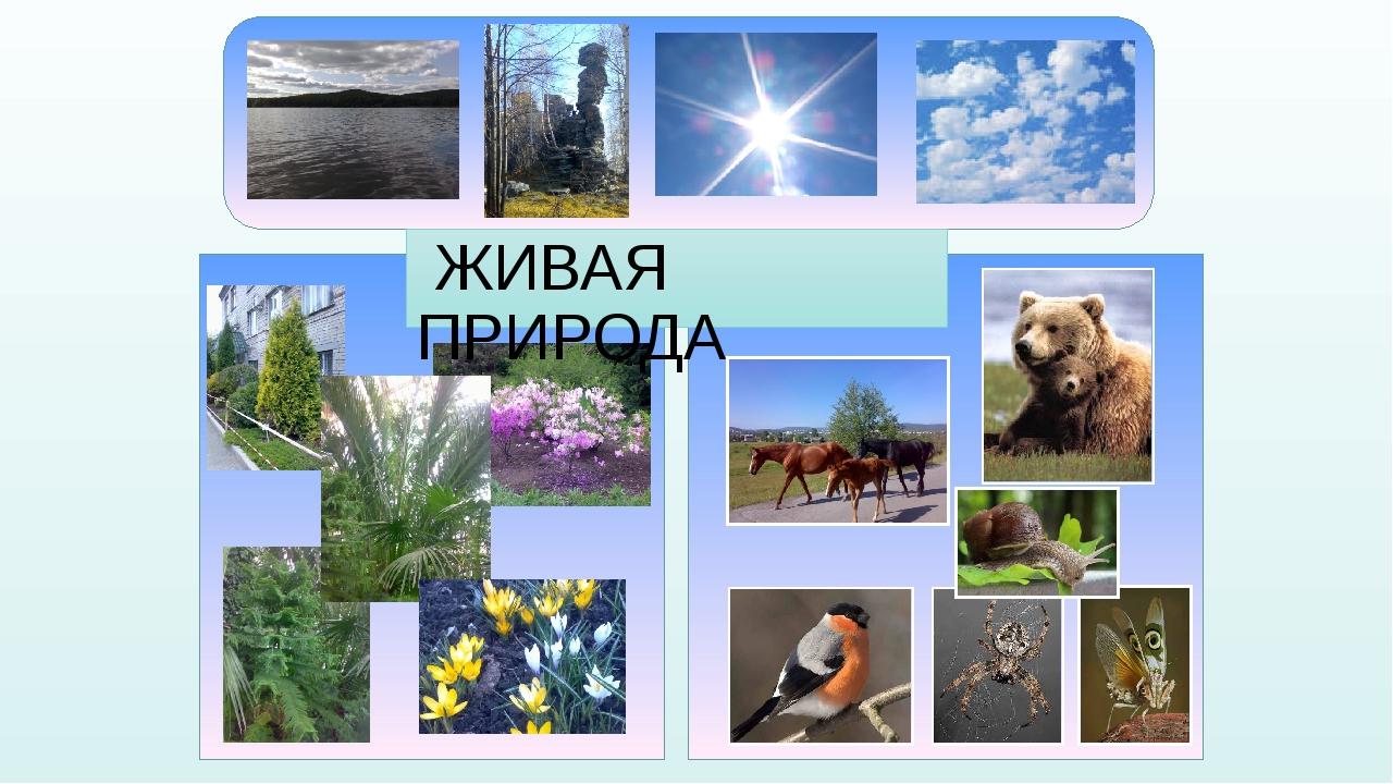 Природа в фотографиях презентация