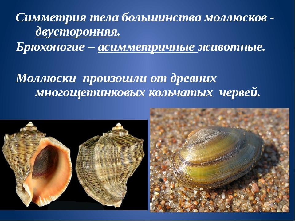 длинный картинки брюхоногих и двустворчатых моллюсков успокоют душу ту