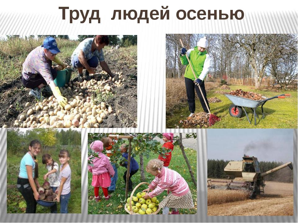 картинки по теме труд людей в природе самую