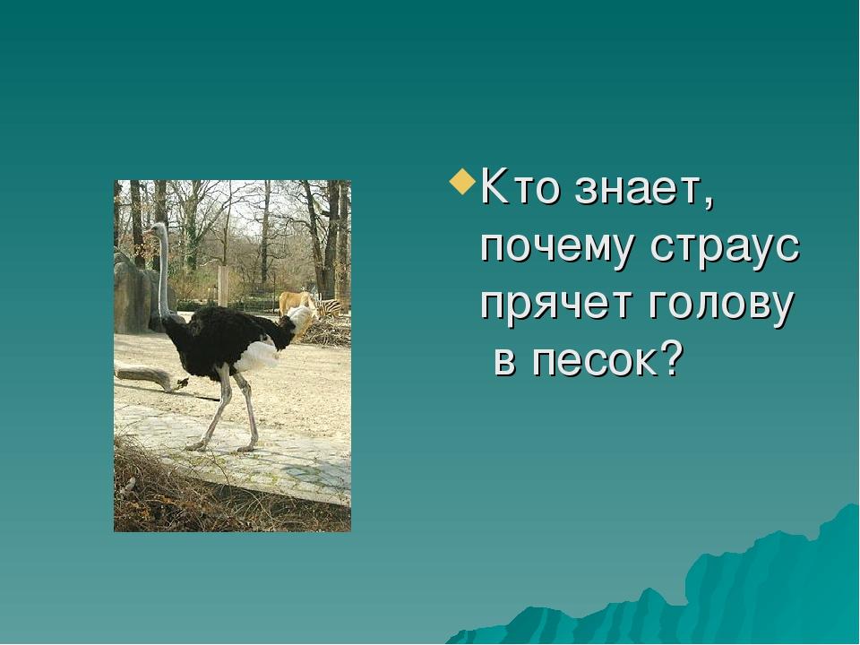 Кто знает, почему страус прячет голову в песок?