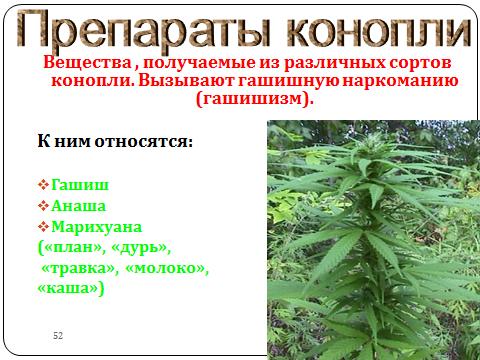 высокоурожайные сорта марихуаны