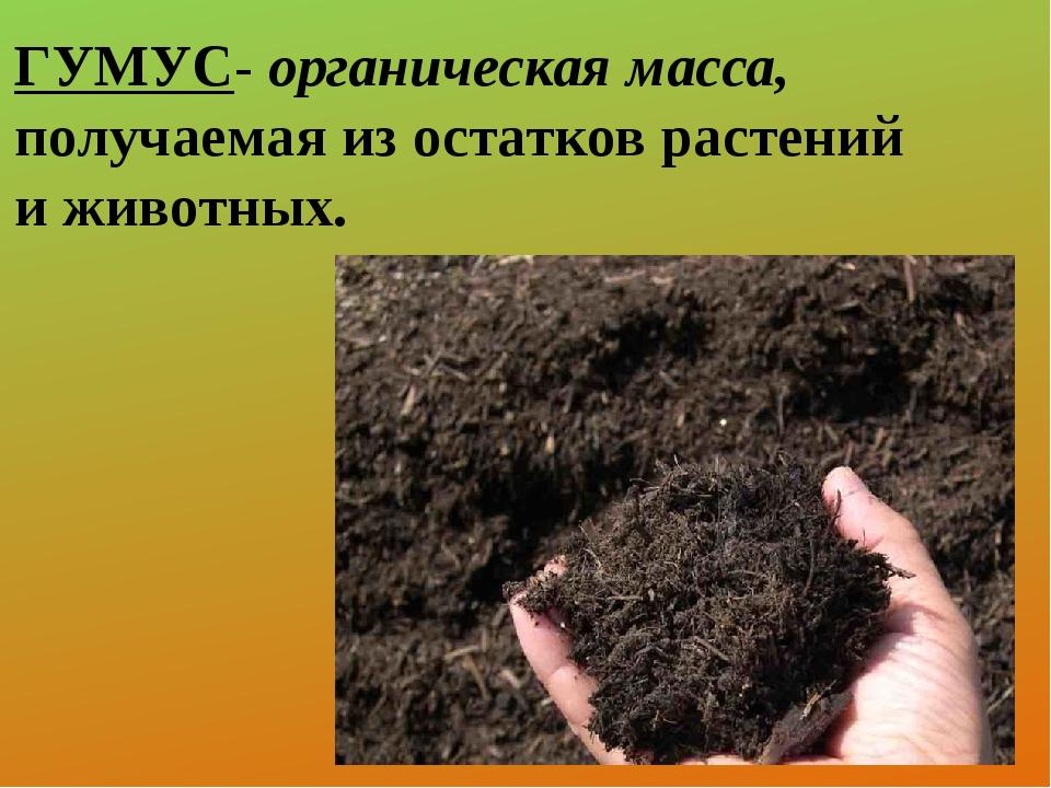 ГУМУС- органическая масса, получаемая из остатков растений и животных.
