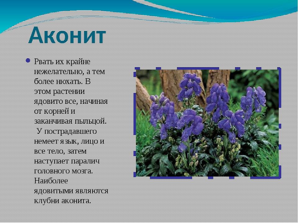 растения оренбургской области фото с названиями и описанием соединяющая часть передней