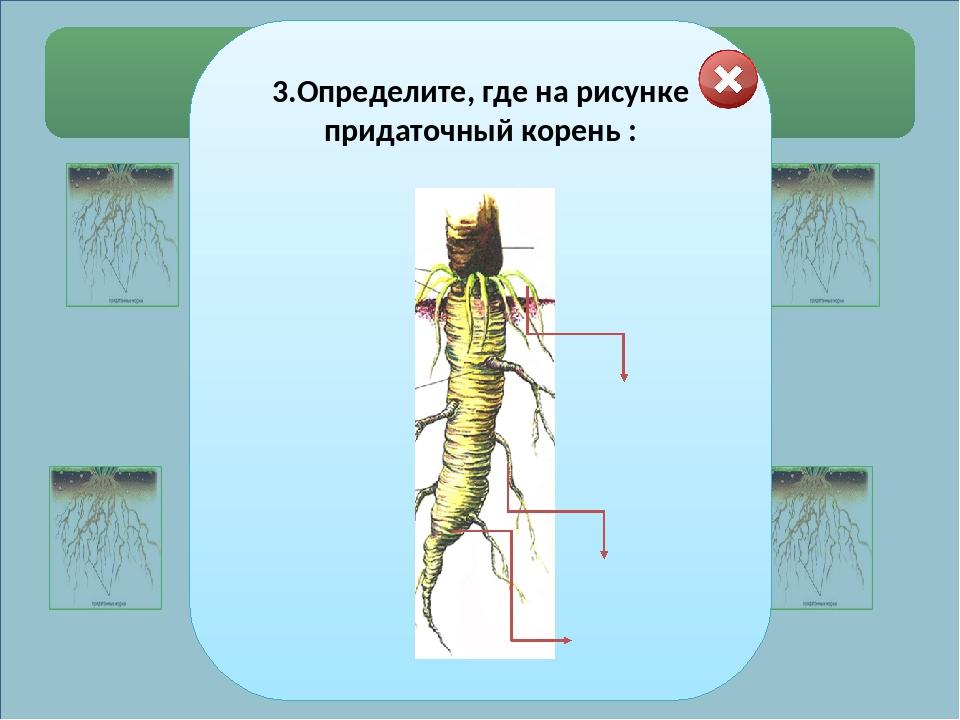 Выберите правильные ответы. 5.Соотнесите тип листорасположения и рисунок: 1....