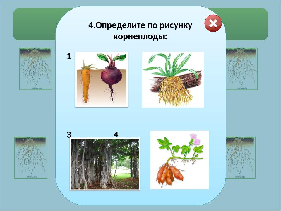 Выберите правильные ответы. 1.Определите тип корневой системы у растений: №1...