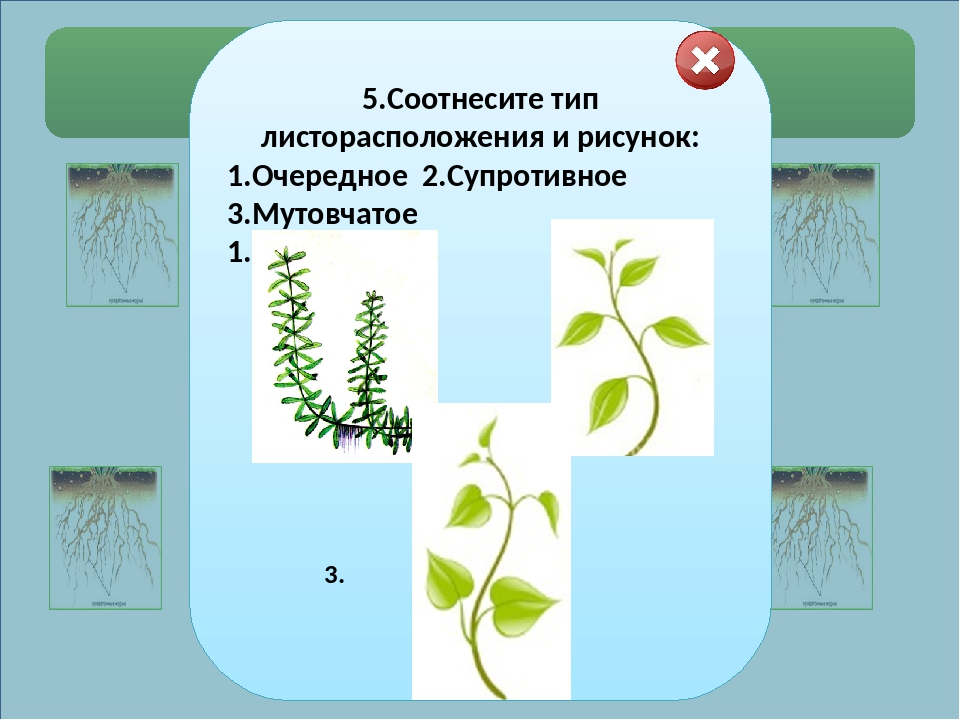 Выберите правильные ответы. 2.Определите функции корней.  1) закрепляет ра...