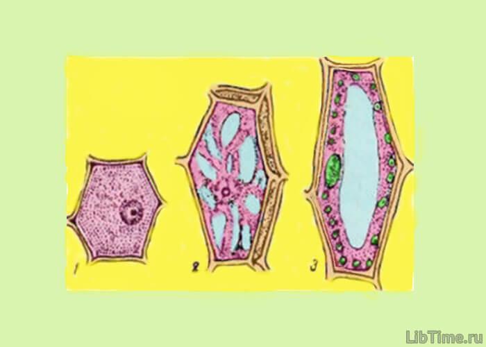 Молодая клетка картинки