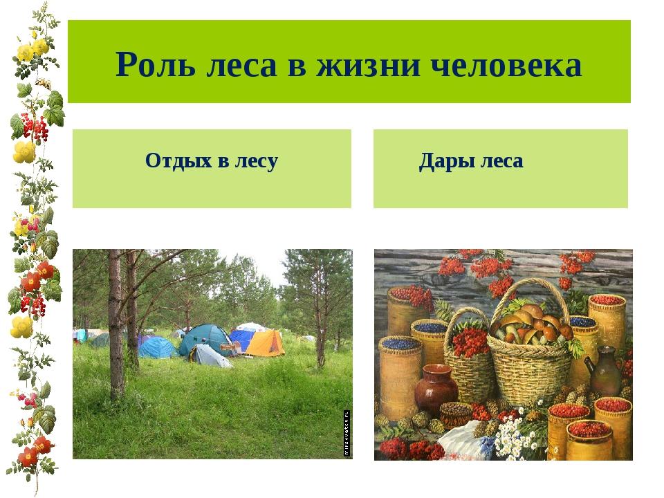 твиттере можно значение леса в жизни человека картинки краткое содержание
