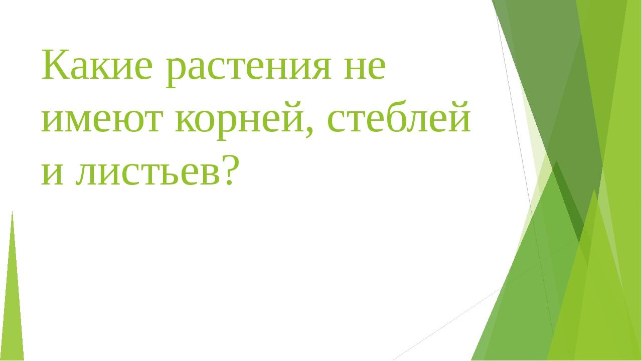 Какие растения не имеют корней, стеблей и листьев?