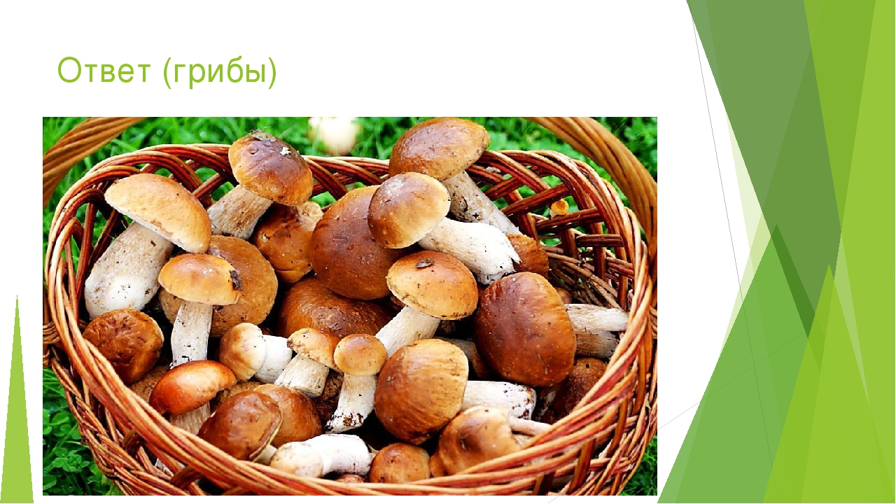 Ответ (грибы)