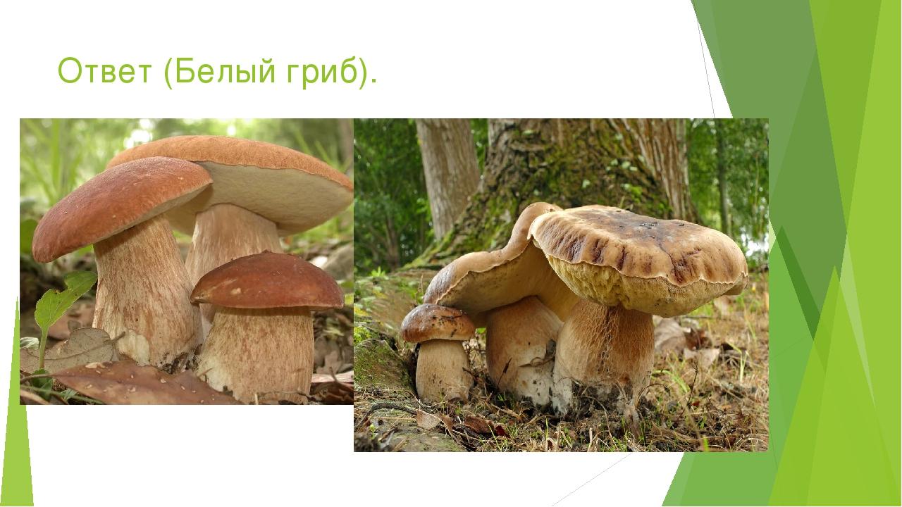 Ответ (Белый гриб).