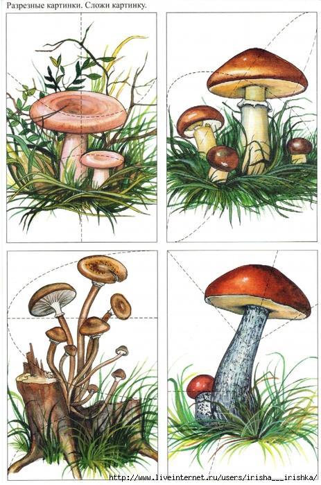 Разрезные картинки по теме грибы