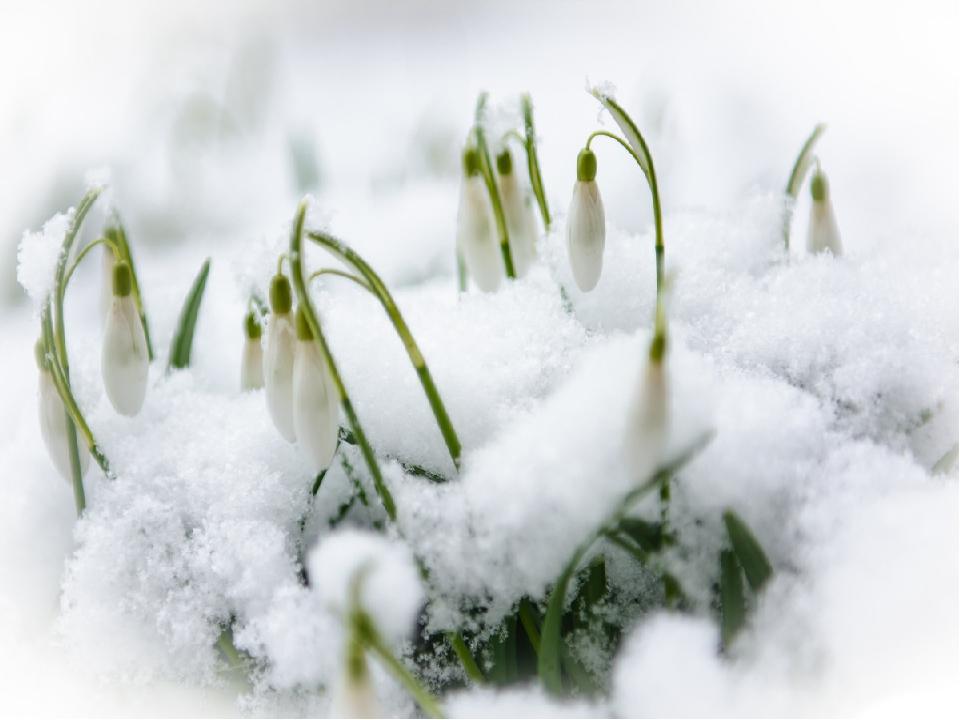 картинки ранней весны день рождения асфальт можно