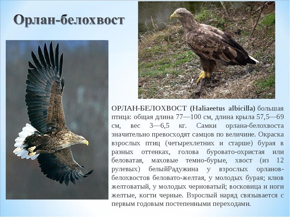Птицы республики коми описание