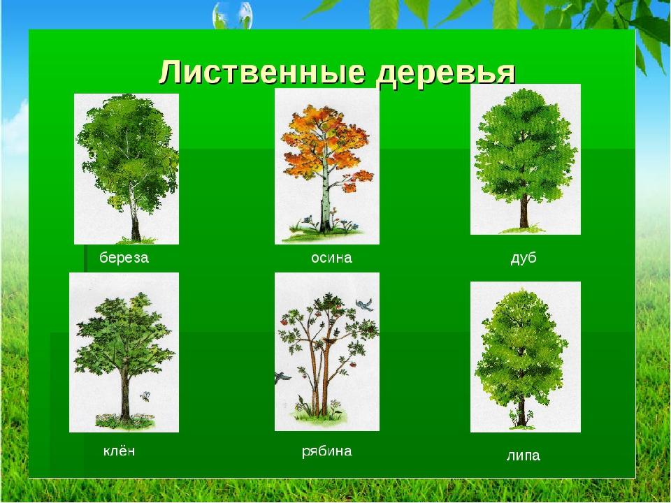 Деревья картинки и название