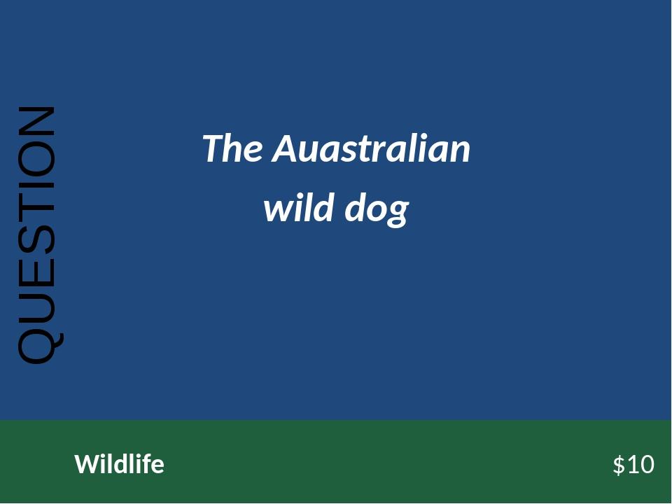 QUESTION Wildlife$10 The Auastralian wild dog