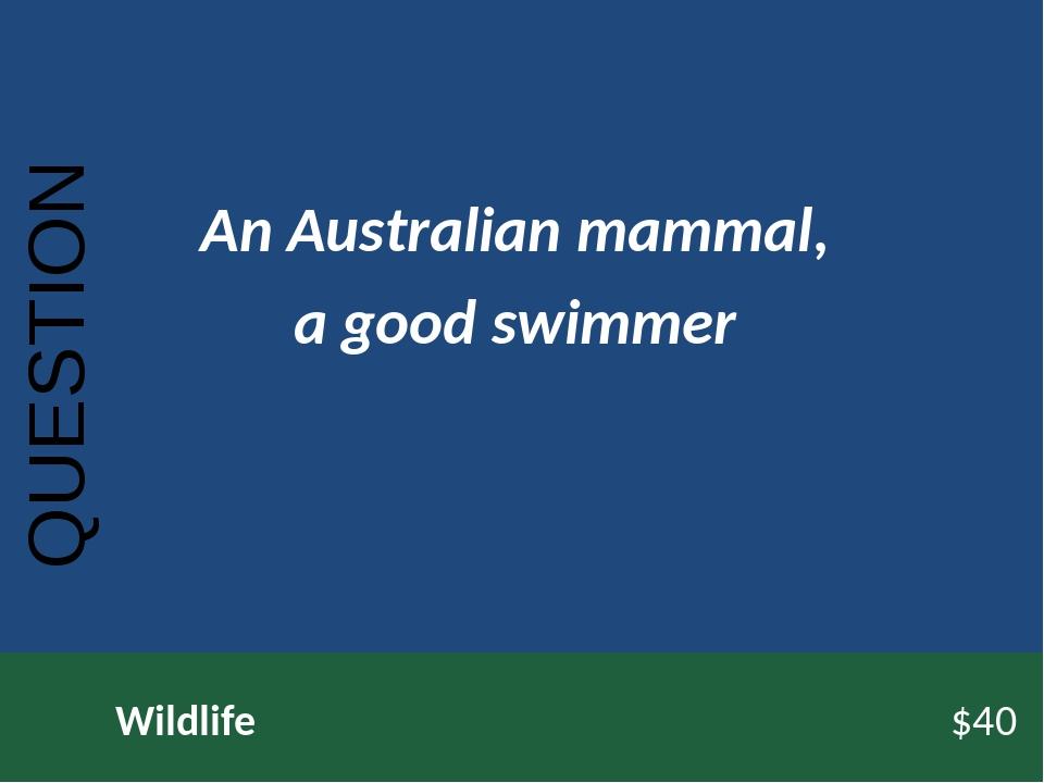 QUESTION Wildlife$40 An Australian mammal, a good swimmer