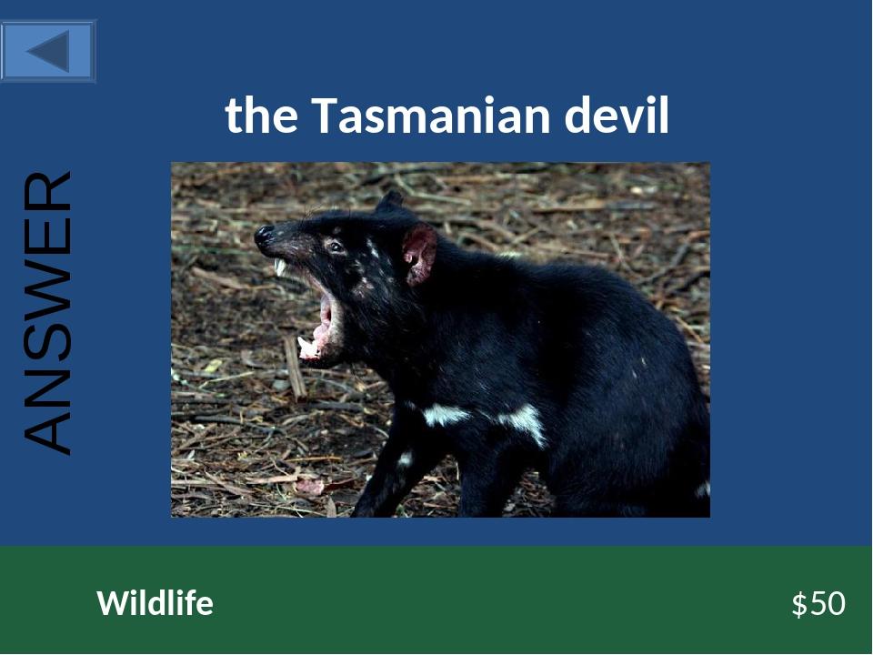 the Tasmanian devil Wildlife $50 ANSWER