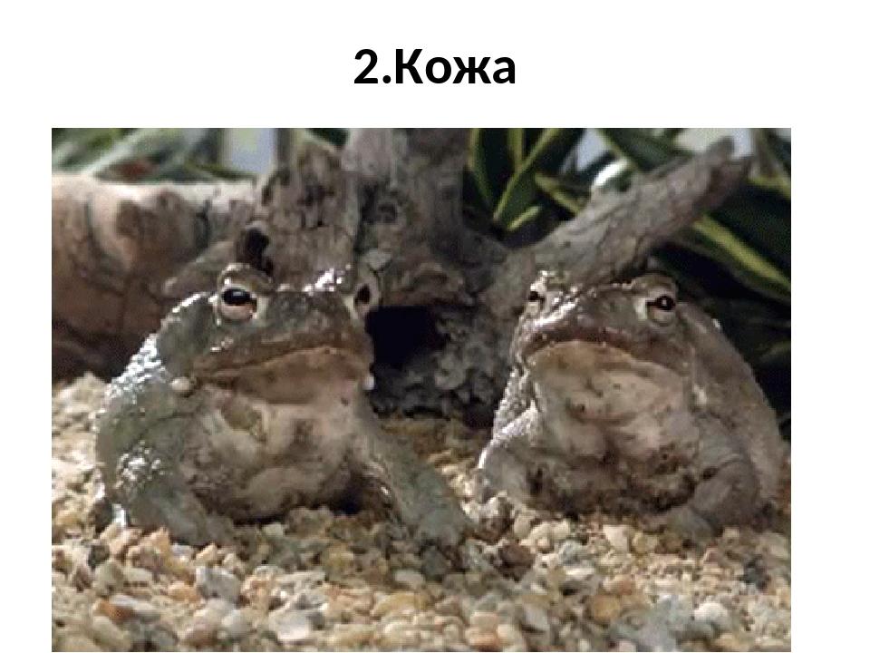 Лягушки смешные гифки