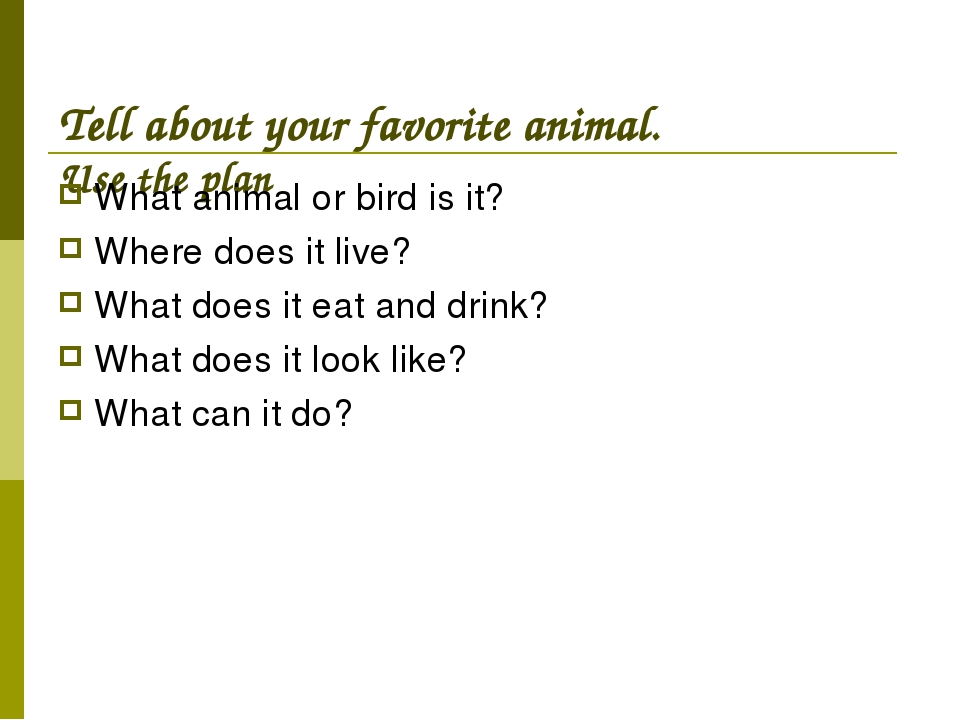 Tell about your favorite animal. Use the plan What animal or bird is it? Whe...