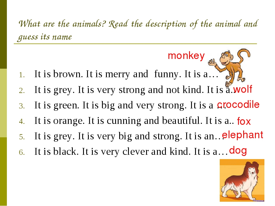 It is brown. It is merry and funny. It is a… It is grey. It is very strong an...