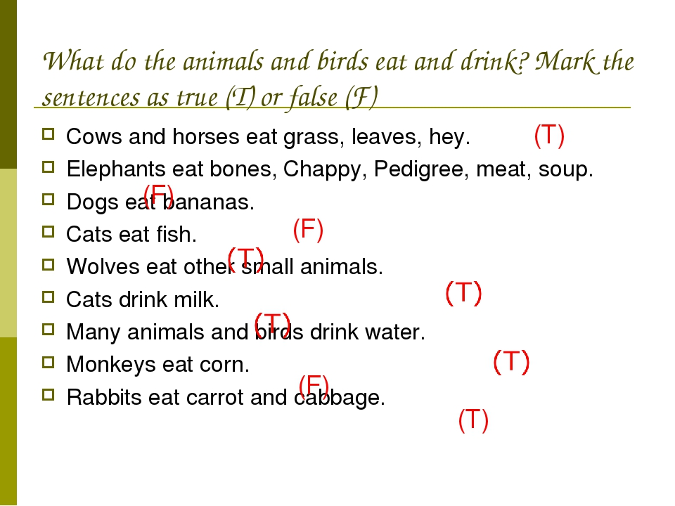 What do the animals and birds eat and drink? Mark the sentences as true (T) o...