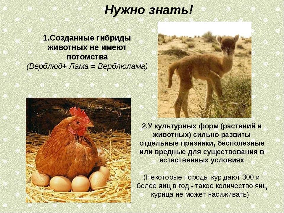 Нужно знать! 1.Созданные гибриды животных не имеют потомства (Верблюд+ Лама =...