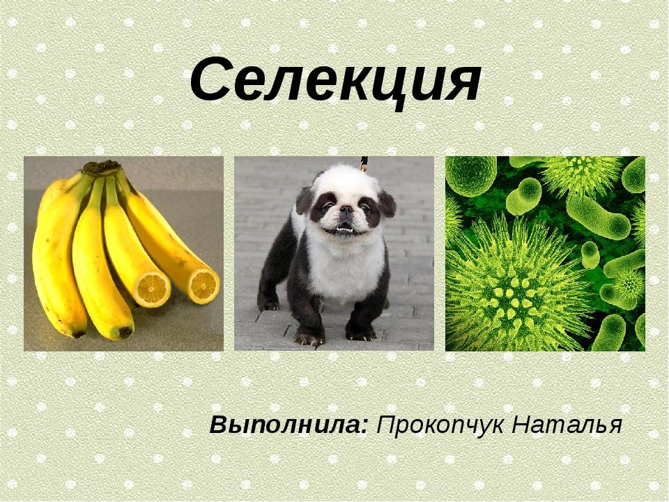Селекция Выполнила: Прокопчук Наталья