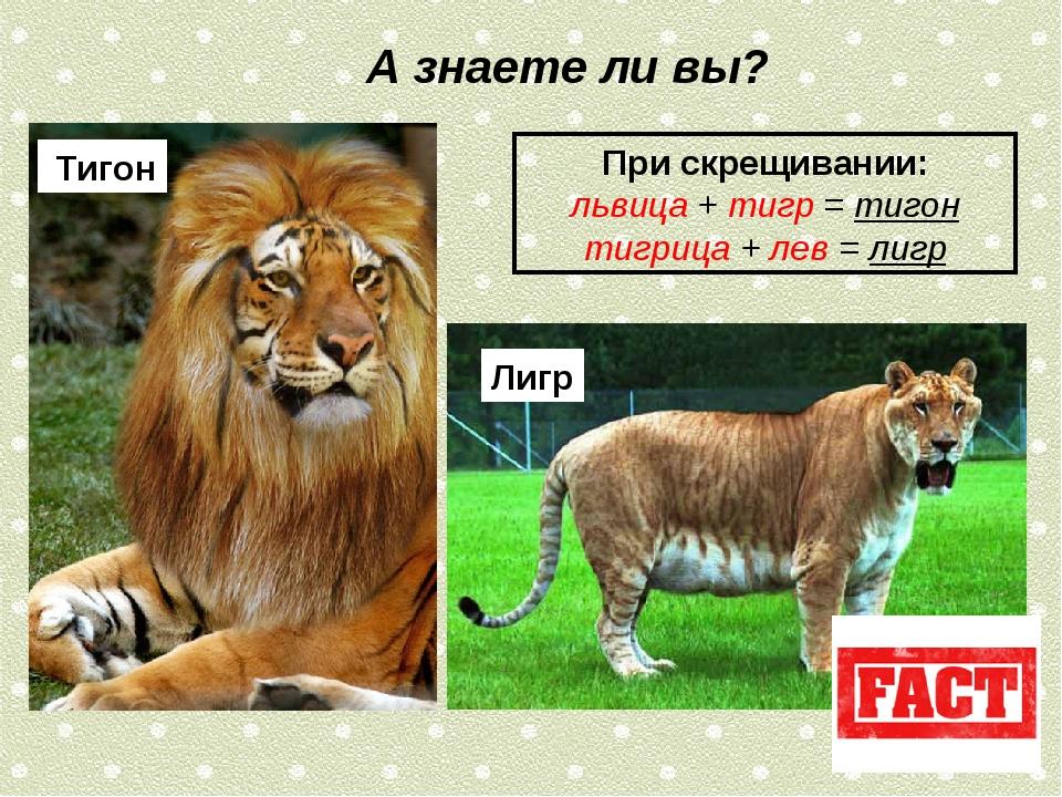 При скрещивании: львица + тигр = тигон тигрица + лев = лигр А знаете ли вы? Т...