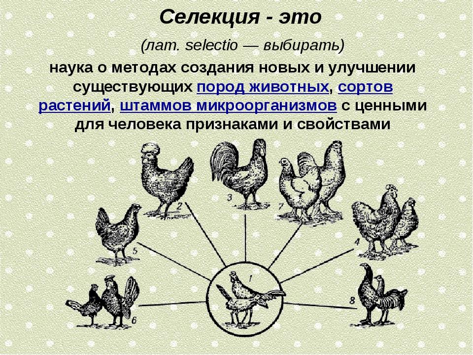 Селекция - это (лат.selectio— выбирать) наука о методах создания новых и...