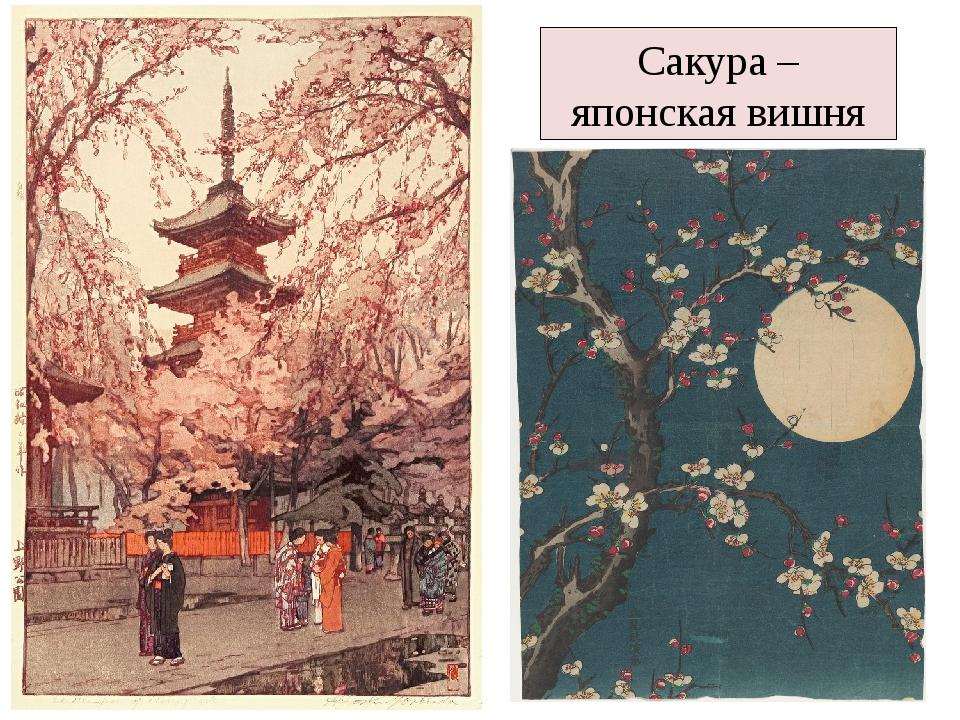 Сакура – японская вишня