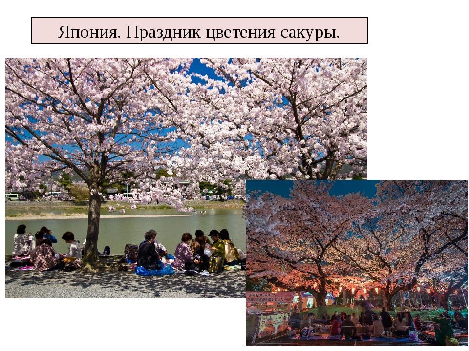 Япония. Праздник цветения сакуры.