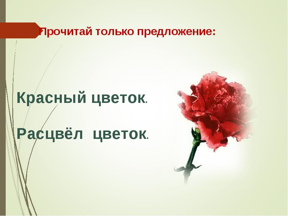 Расцвёл цветок. Прочитай только предложение: Красный цветок.