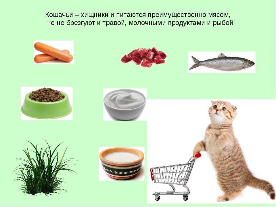 Картинки кошка ест для детей