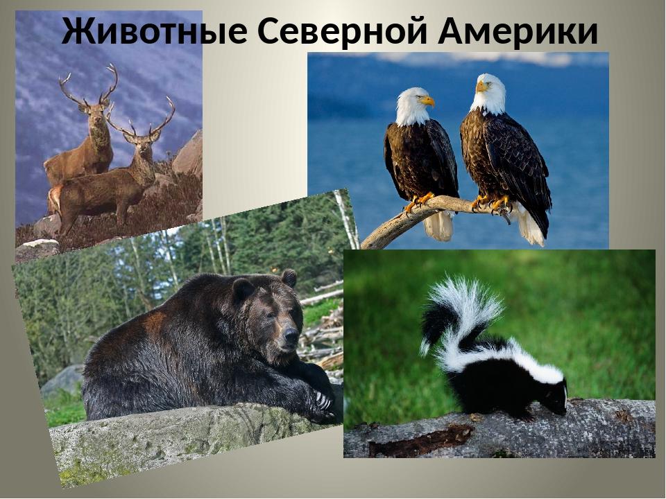 Животные северной америки фото с описанием