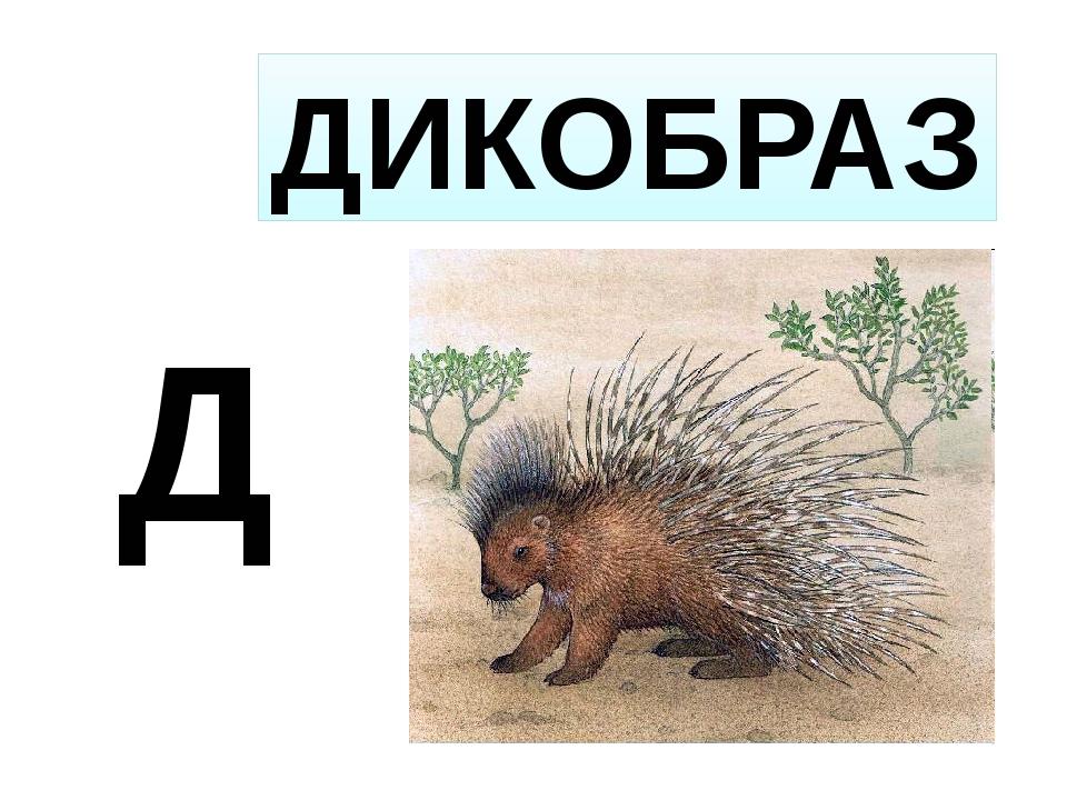 Д ДИКОБРАЗ